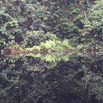 Sacrée forêt *